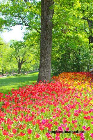 Il bosco e i sentieri con i tulipani