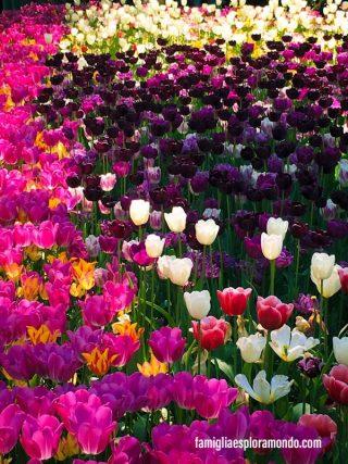 Tulipani colorati al castello di pralormo