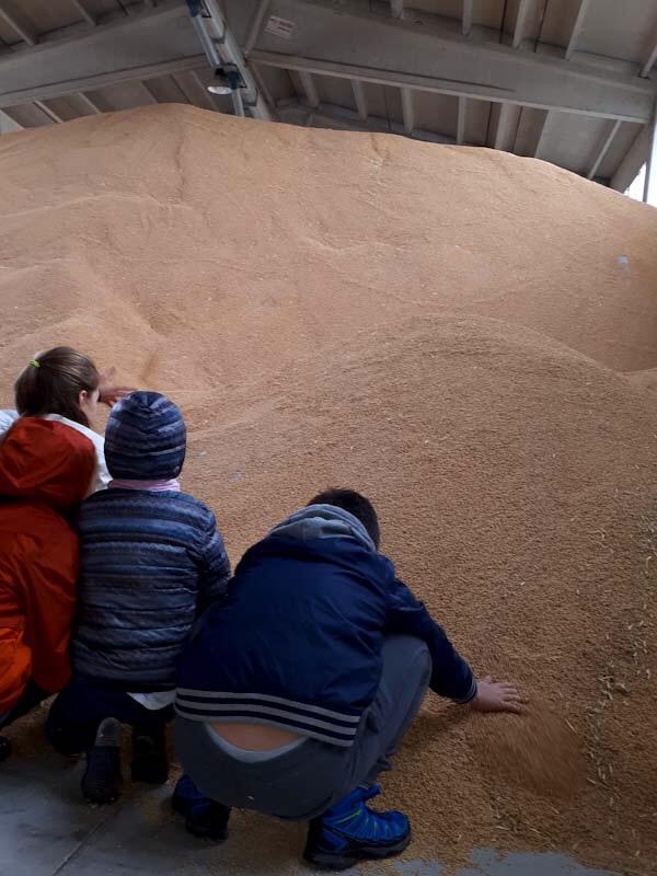 Risaia Sant'Angleo Lomellina: la montagna di riso con la lolla