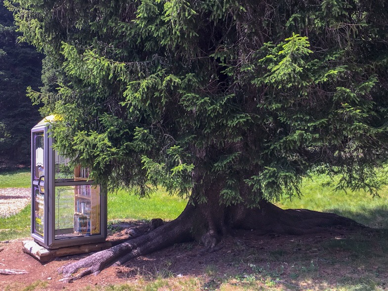 Bibliocabina e pino secolare parco giochi San Bernardino