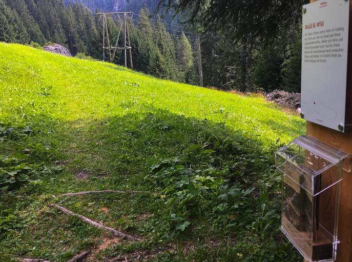 Sentiero della foresta innerferrera