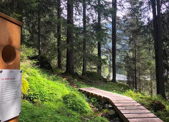 Ponte sentiero della foresta innerferrera