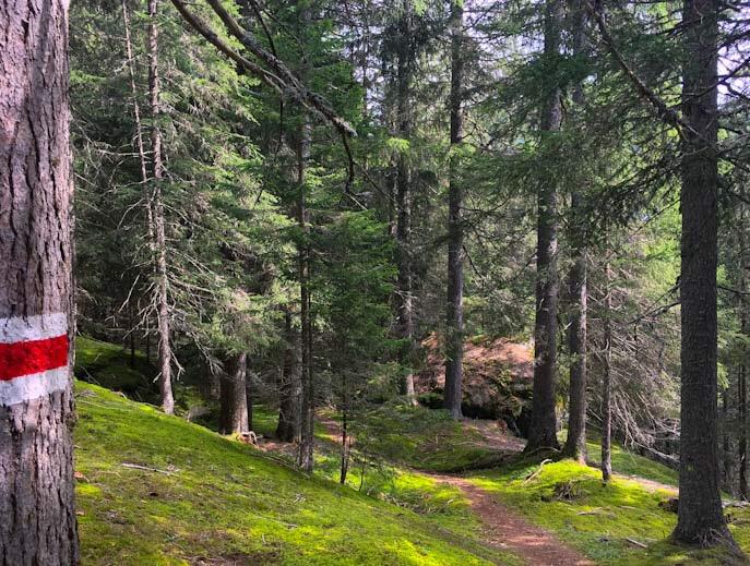 Bosco del sentiero della foresta di innerferrera