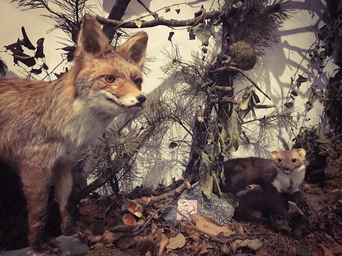 Animali imbalsamati al centro didattico scientifico di tradate