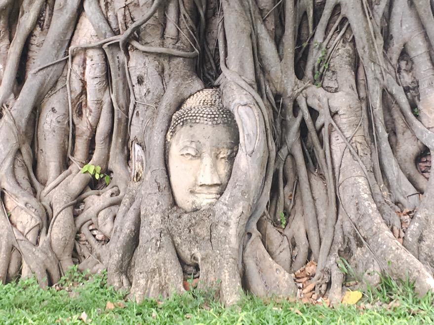 Volto di Buddha fra le radici ad Ayutthaia, una delle tappe principali de nostro itinerario i. Thailandia on the road