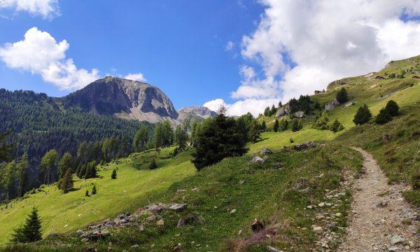 Dove vedere gli stambecchi: caccia al tesoro al Parco Naturale Beverin, in Svizzera