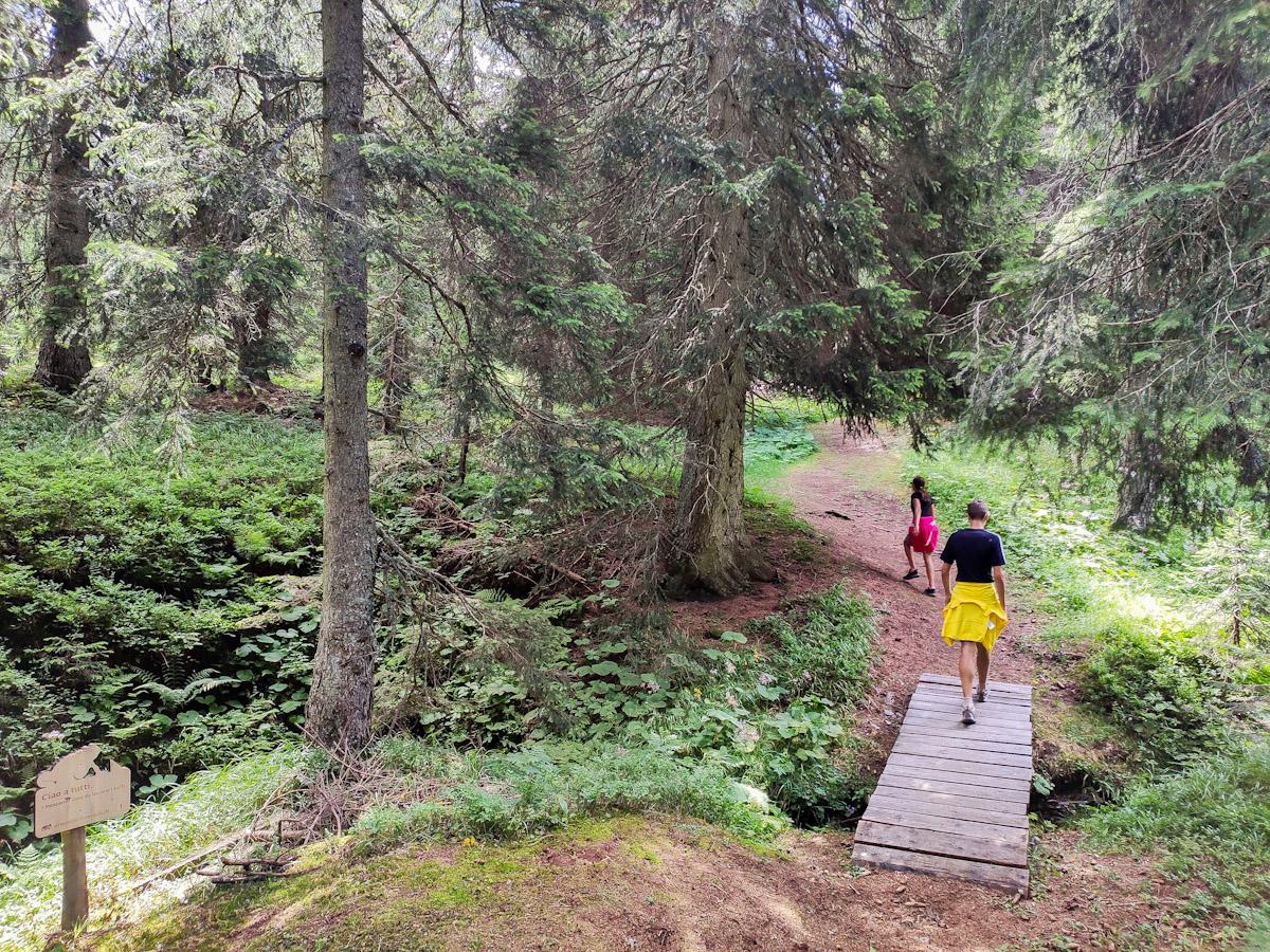 Sentiero didattico Diversità Forestale a San Bernardino in Svizzera percorso tematico