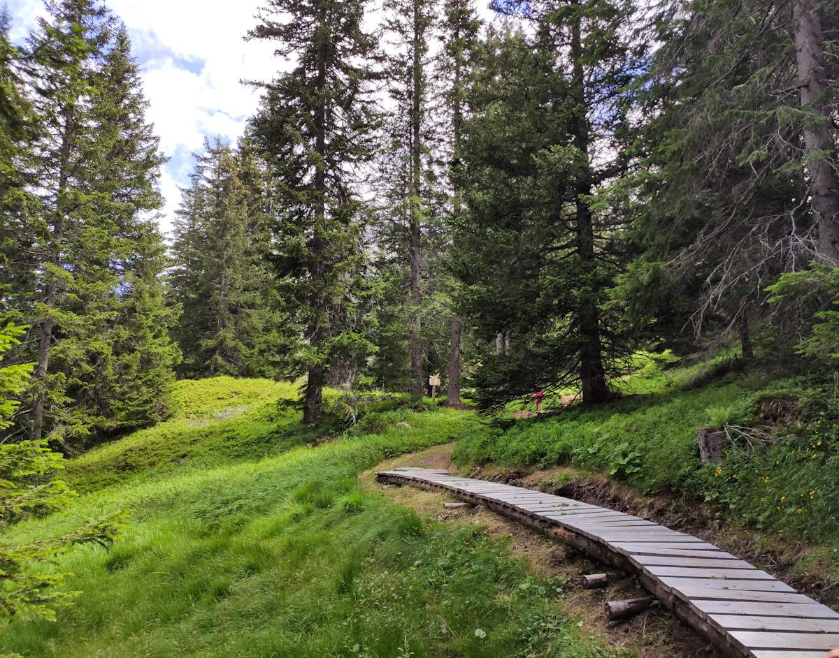 Sentiero didattico Diversità Forestale a San Bernardino in Svizzera, percorso tematico