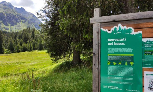 """Sentiero didattico """"Diversità Forestale"""" a San Bernardino, in Svizzera"""