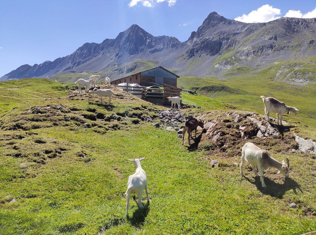 Malga al Passo dell'Alpisella