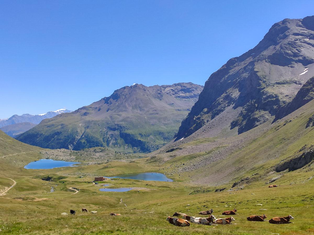 Panorama salendo verso il Passo di Val Viola Bormina