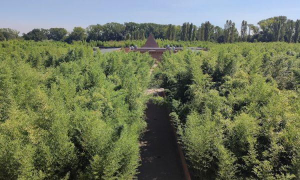 Il Labirinto della Masone: il più grande d'Europa