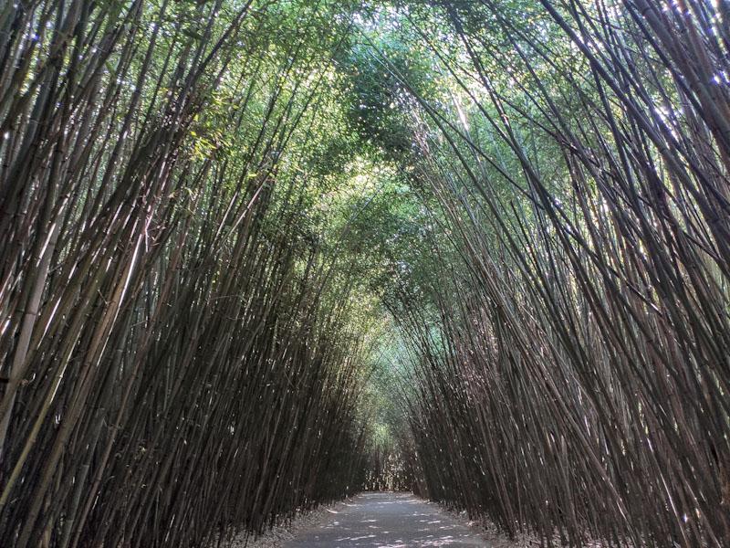 Labirinto della Masone realizzato con canne di bambù