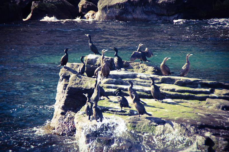 Birdwatching a Gjesvaer Capo Nord