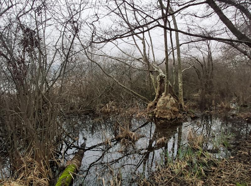 alberi morti dove soggiornano i demolitori al Lago di Sartirana