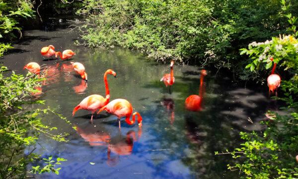 Oasi Sant'Alessio: fauna e flora