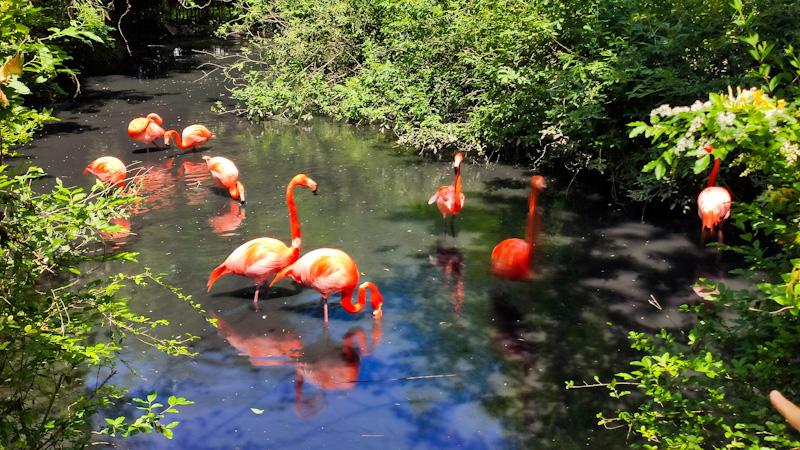 Fenicotteri rosa oasi di Sant'Alessio