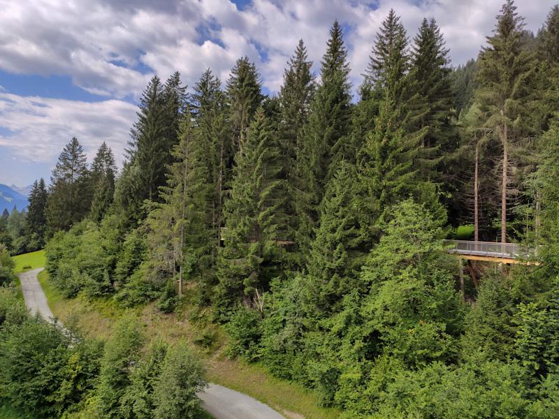 sentiero nella foresta Uaul Ravanasc